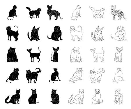 Breeds of cats black,outline icons in set collection for design. Pet cat vector symbol stock web illustration.