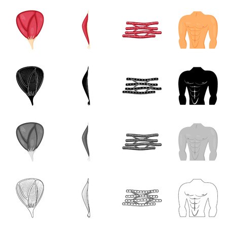 Vector illustration of fiber and muscular icon. Set of fiber and body  stock symbol for web. Illustration