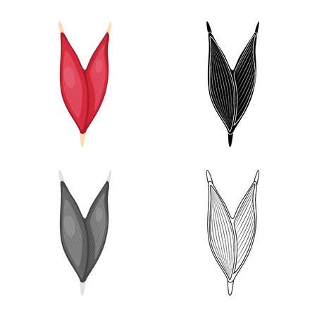Vector design of fiber and muscular sign. Set of fiber and body vector icon for stock. Vector Illustration