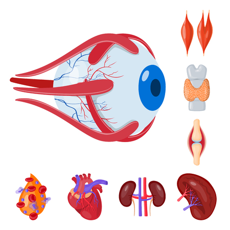 Isolated object of anatomy and organ sign. Collection of anatomy and medical stock symbol for web.