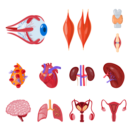 Vector design of anatomy and organ icon. Collection of anatomy and medical vector icon for stock. Illustration