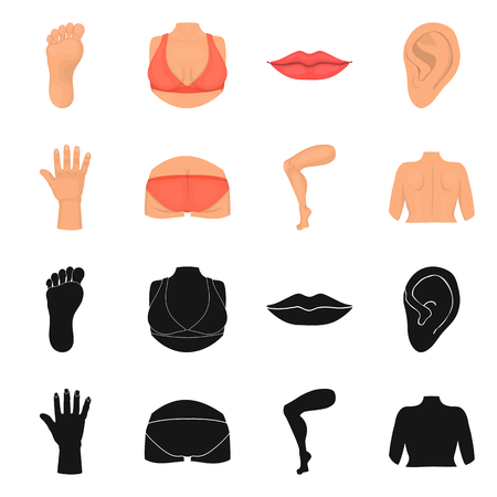 Vector illustration of body and part symbol. Set of body and anatomy stock vector illustration. Illustration