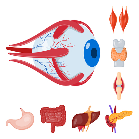 Vector illustration of anatomy and organ icon. Set of anatomy and medical stock vector illustration. Иллюстрация