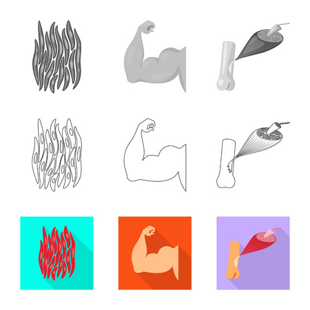 Vector illustration of fiber and muscular sign. Collection of fiber and body  stock symbol for web.