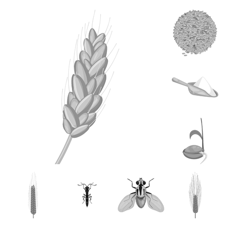 Isolated object of rye and plant. Collection of rye and corn stock symbol for web.