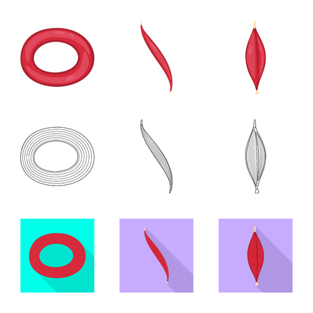 Vector design of fiber and muscular sign. Set of fiber and body  stock symbol for web.