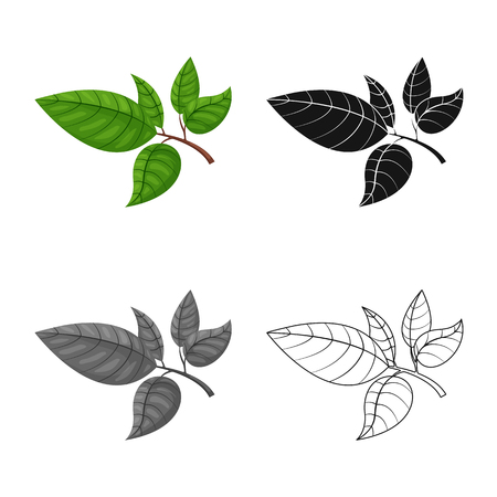 Vector illustration of tea and leaf icon. Set of tea and fresh stock symbol for web.