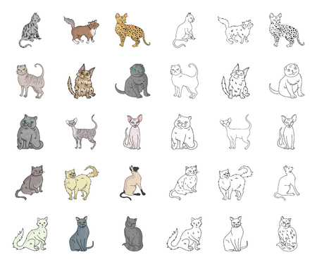 Breeds of cats cartoon,outline icons in set collection for design. Pet cat vector symbol stock web illustration.