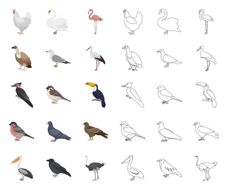 Types of birds cartoon,outline icons in set collection for design. Home and wild bird vector symbol stock web illustration. Illustration