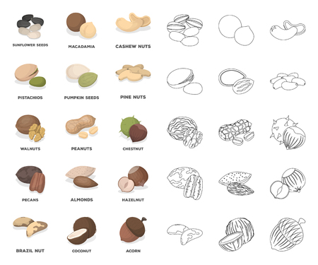 Different kinds of nuts cartoon,outline icons in set collection for design.Nut Food vector symbol stock web illustration.