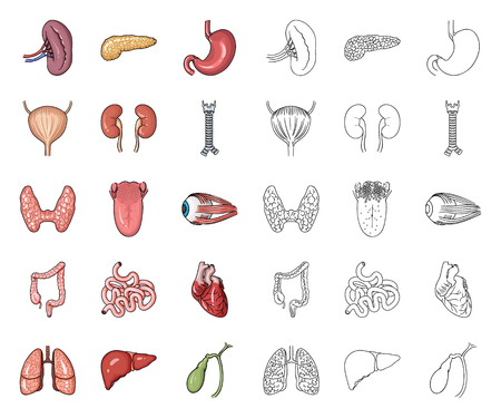 Human organs cartoon,outline icons in set collection for design. Anatomy and internal organs vector symbol stock web illustration.