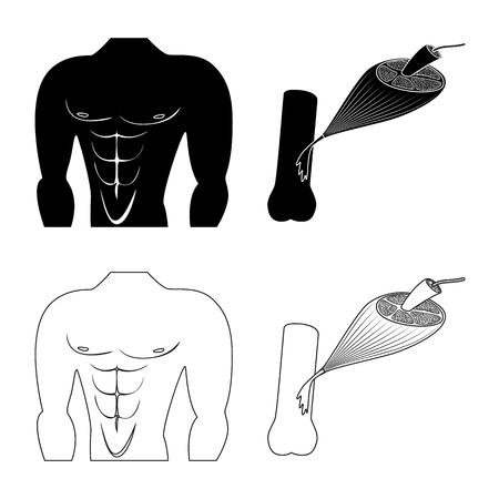 Objet isolé de fibre et symbole musculaire. Collection d'illustration vectorielle stock de fibres et de corps.