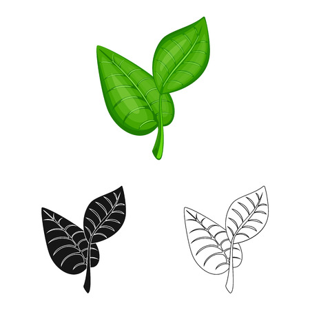 Isolated object of leaf and plants sign. Collection of leaf and green stock vector illustration.