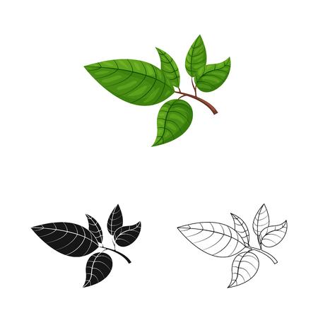 Vektordesign des Tee- und Blattsymbols. Sammlung von Tee und frischem Vektorsymbol für Aktien.