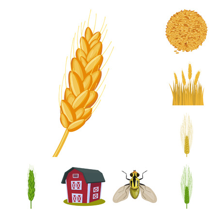 Vector illustration of wheat and corn symbol. Collection of wheat and harvest stock vector illustration.
