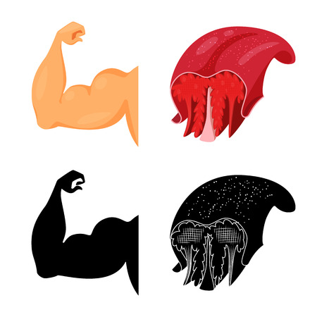 Isolated object of fiber and muscular symbol. Set of fiber and body  vector icon for stock. 向量圖像