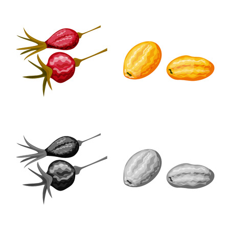 Vector illustration of food  and raw  icon. Collection of food  and nature   stock vector illustration. Illustration