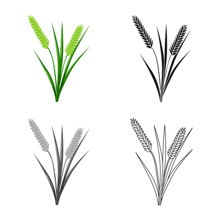 Isolated object of grain and rice  symbol. Collection of grain and garden vector icon for stock.