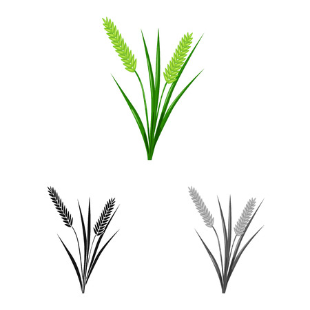 Vector illustration of grain and rice  logo. Collection of grain and garden stock symbol for web.