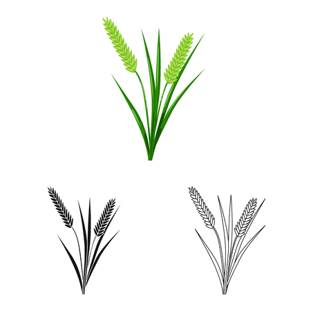 Vector illustration of grain and rice  logo. Collection of grain and garden stock vector illustration.