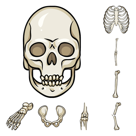 Vector design of bone and skeleton icon. Collection of bone and human stock vector illustration. 向量圖像