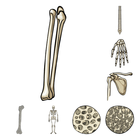 Vector design of bone and skeleton icon. Set of bone and human stock vector illustration.