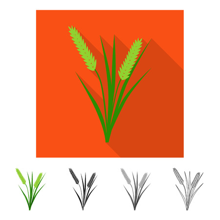 Vector design of grain and rice  sign. Collection of grain and garden vector icon for stock. Иллюстрация