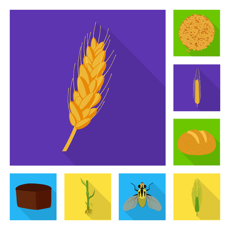 Isolated object of wheat and corn sign. Collection of wheat and harvest stock symbol for web.