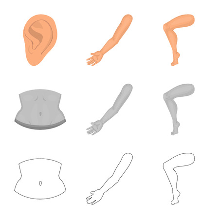Vector design of body and part icon. Set of body and anatomy vector icon for stock.