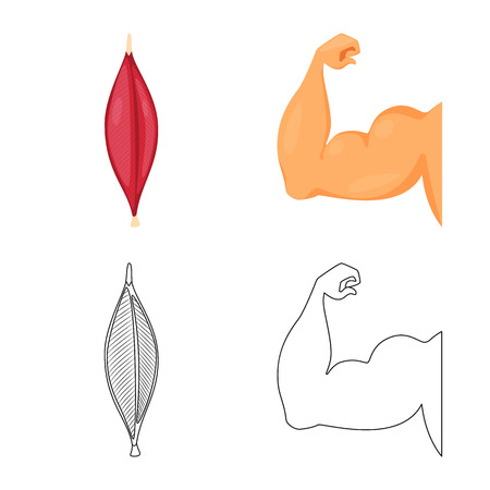 Vector design of fiber and muscular. Collection of fiber and body vector icon for stock. Vector Illustration