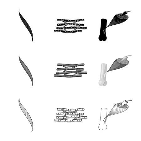 Isolated object of fiber and muscular sign. Collection of fiber and body  vector icon for stock.