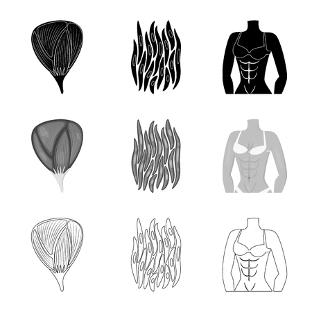 Isolated object of fiber and muscular icon. Set of fiber and body  stock symbol for web.