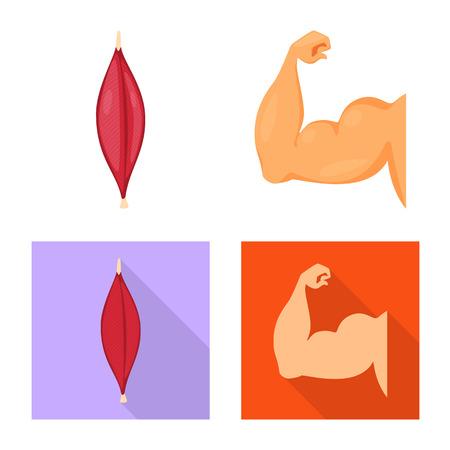 Vector design of fiber and muscular sign. Set of fiber and body  stock vector illustration. Illusztráció