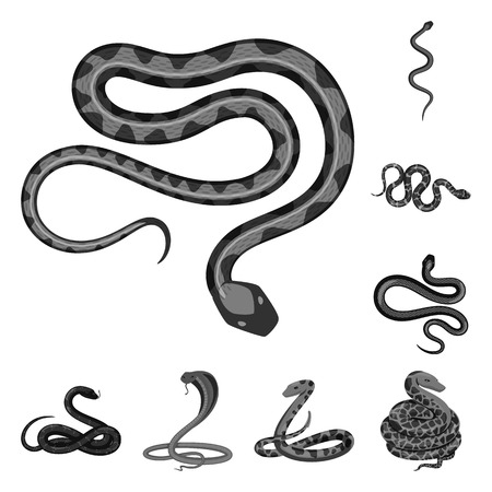 Isolated object of harm and bite icon. Set of harm and reptile stock vector illustration.