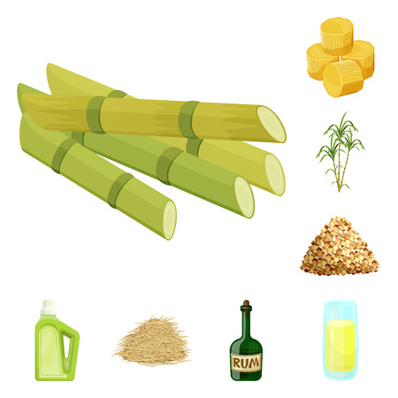Isolated object of sugarcane and cane icon. Set of sugarcane and field stock symbol for web. Ilustração
