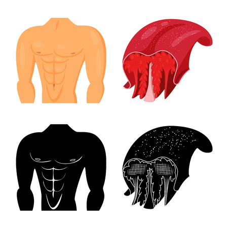 Isolated object of fiber and muscular. Collection of fiber and body  stock vector illustration. Çizim