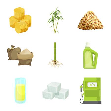 Vector design of sugarcane and cane sign. Set of sugarcane and field vector icon for stock. 일러스트