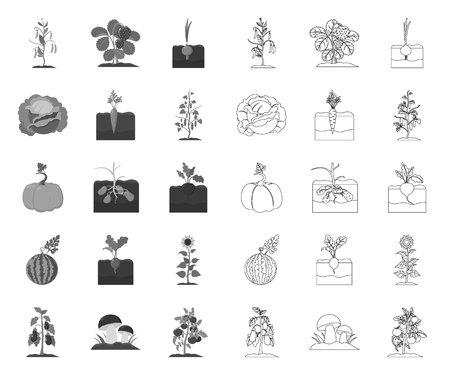 Plant, vegetable mono,outline icons in set collection for design. Garden and harvest vector symbol stock web illustration.