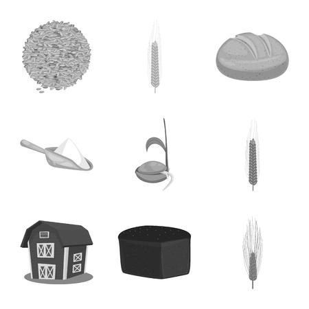 Vector design of rye and plant  symbol. Set of rye and corn stock vector illustration. Ilustração