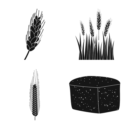 Vector design of rye and plant logo. Collection of rye and corn stock symbol for web.