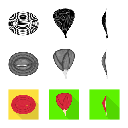 Isolated object of fiber and muscular icon. Set of fiber and body stock vector illustration.