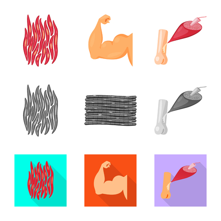 Vector design of fiber and muscular icon. Collection of fiber and body  vector icon for stock.