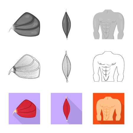 Vector design of fiber and muscular icon. Set of fiber and body  stock vector illustration.