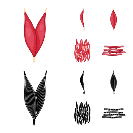 Vector design of fiber and muscular symbol. Collection of fiber and body  vector icon for stock. Stock Illustratie