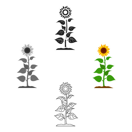 Sunflower icon cartoon,black. Single plant icon from the big farm, garden, agriculture cartoon,black.