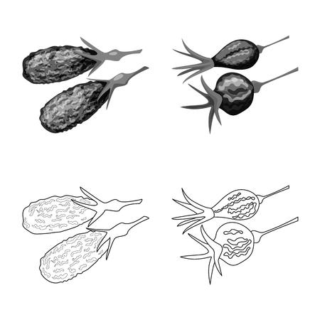 Vector illustration of food  and raw  symbol. Collection of food  and nature   vector icon for stock. Banco de Imagens - 123109503