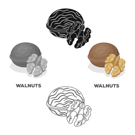 Walnats in the shell.Different kinds of nuts single icon in cartoon,black style vector symbol stock illustration.