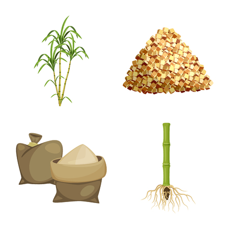 Isolated object of sugarcane and cane logo. Collection of sugarcane and field vector icon for stock. Иллюстрация