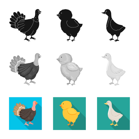Isolated object of breeding and kitchen  sign. Collection of breeding and organic  vector icon for stock.