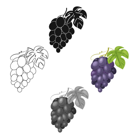 Bunch of grapes icon in cartoon,black style isolated on white background. Wine production symbol stock vector illustration.